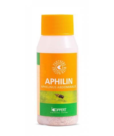 Aphilin (Aphilinus abdominalis)