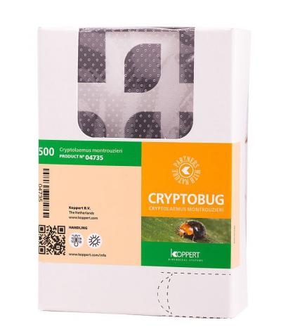 Cryptobug (Cryptolaemus montrouzieri / Adulte)