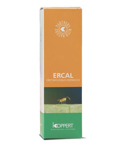 Ercal (Eretmocerus eremicus)