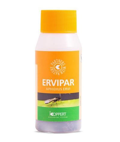 Ervipar (Aphidius ervi)